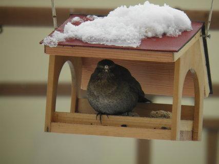 FOTKA - Ptáci v zimě 136
