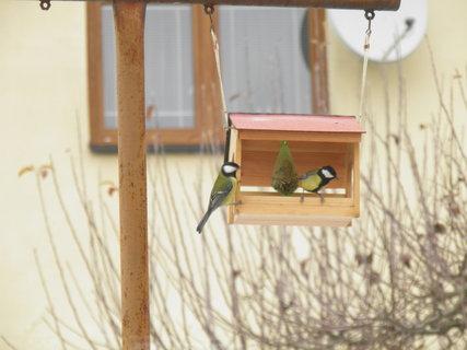 FOTKA - Ptáci v zimě 138