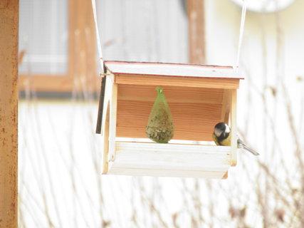 FOTKA - Ptáci v zimě 139