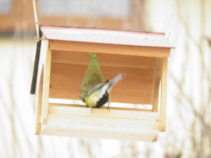 FOTKA - Ptáci v zimě 140