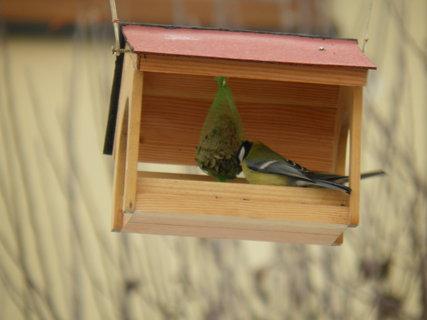 FOTKA - Ptáci v zimě 141