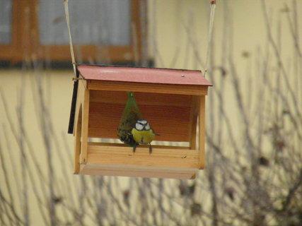 FOTKA - Ptáci v zimě 142