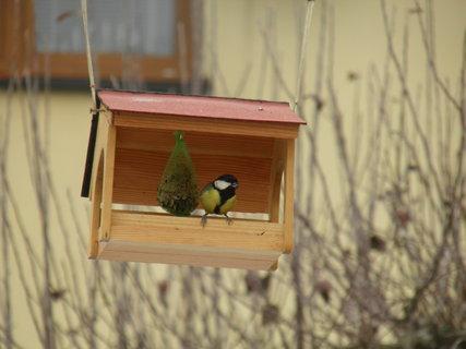 FOTKA - Ptáci v zimě 143