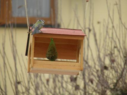 FOTKA - Ptáci v zimě 144