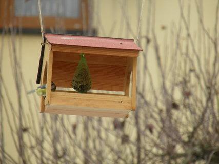 FOTKA - Ptáci v zimě 145