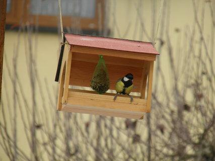 FOTKA - Ptáci v zimě 147