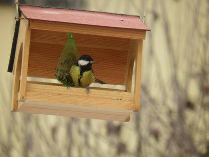 FOTKA - Ptáci v zimě 148