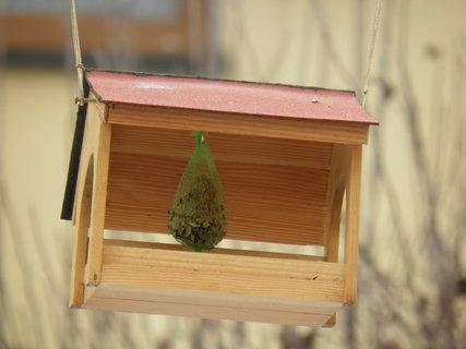 FOTKA - Ptáci v zimě 149
