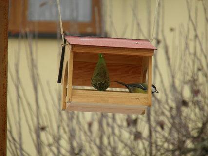 FOTKA - Ptáci v zimě 150