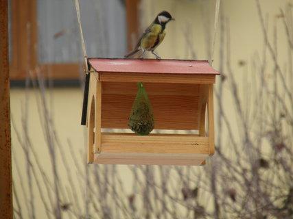 FOTKA - Ptáci v zimě 153