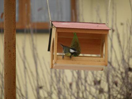 FOTKA - Ptáci v zimě 154
