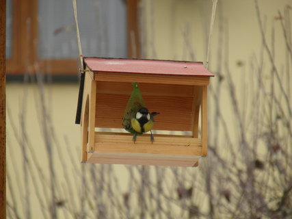 FOTKA - Ptáci v zimě 155