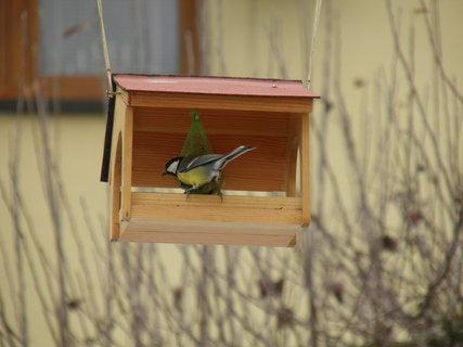 FOTKA - Ptáci v zimě 156