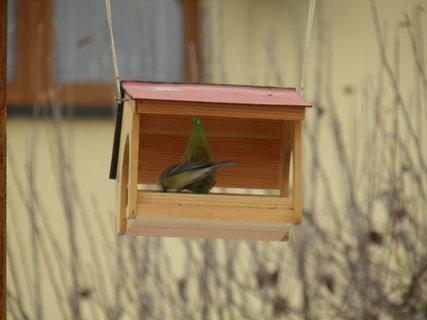 FOTKA - Pt�ci v zim� 157
