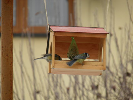 FOTKA - Ptáci v zimě 158