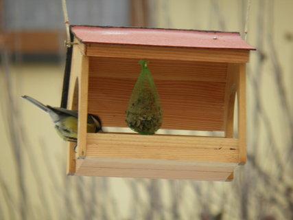 FOTKA - Ptáci v zimě 161