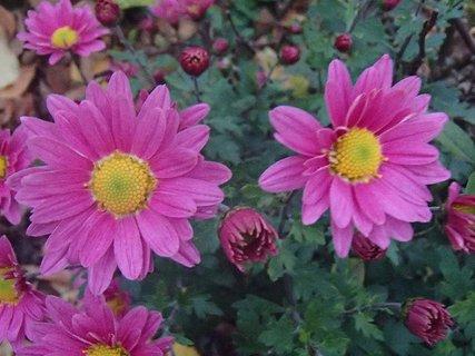 FOTKA - 16.11.2013 na záhrade