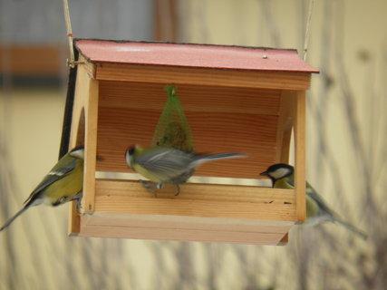 FOTKA - Ptáci v zimě 162