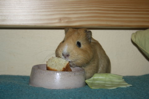 FOTKA - jídlo
