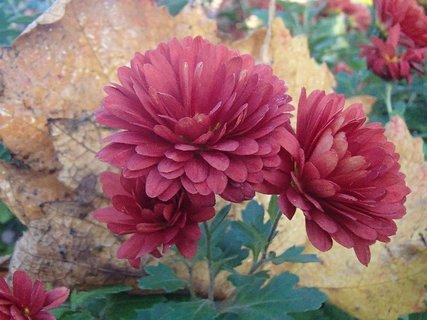 FOTKA - spadnutý list za kvetmi