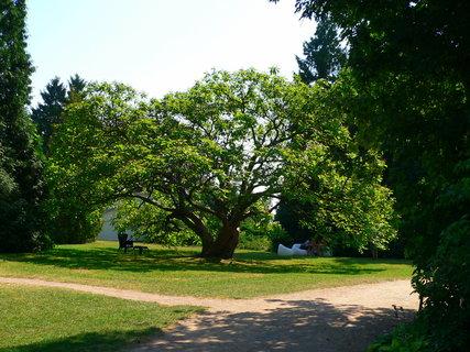 FOTKA - Mohutný strom