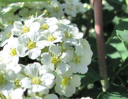 FOTKA - květy keřů