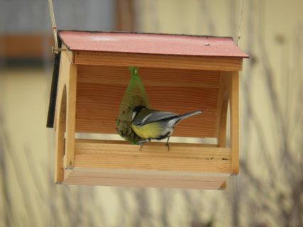 FOTKA - Ptáci v zimě 165