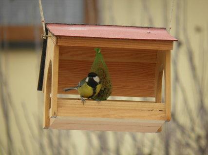 FOTKA - Ptáci v zimě 166