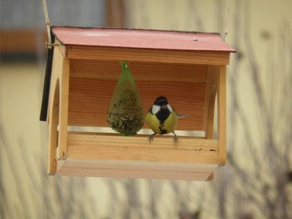 FOTKA - Ptáci v zimě 167