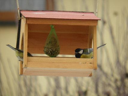 FOTKA - Ptáci v zimě 170