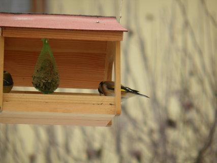 FOTKA - Ptáci v zimě 172