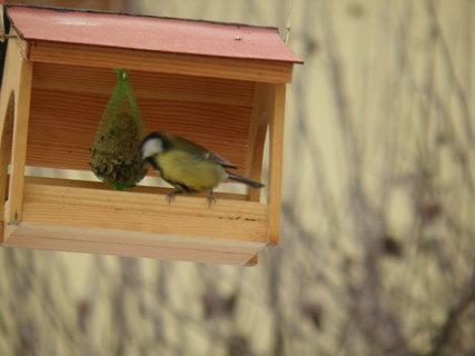 FOTKA - Ptáci v zimě 174