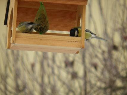 FOTKA - Ptáci v zimě 175