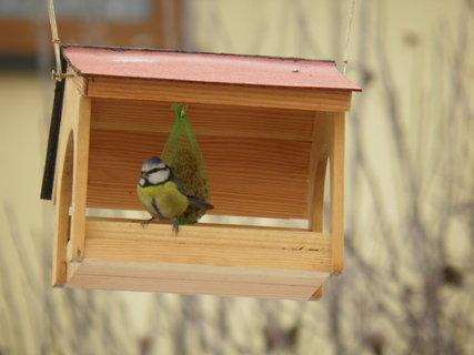 FOTKA - Ptáci v zimě 176