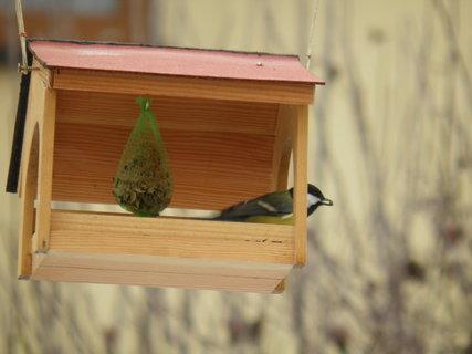 FOTKA - Ptáci v zimě 177