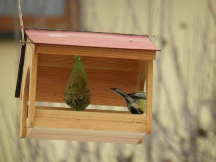 FOTKA - Ptáci v zimě 179