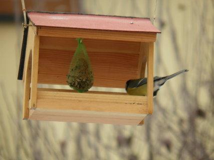 FOTKA - Ptáci v zimě 181