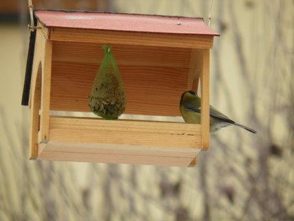 FOTKA - Pt�ci v zim� 182