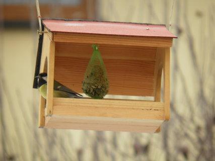 FOTKA - Ptáci v zimě 183