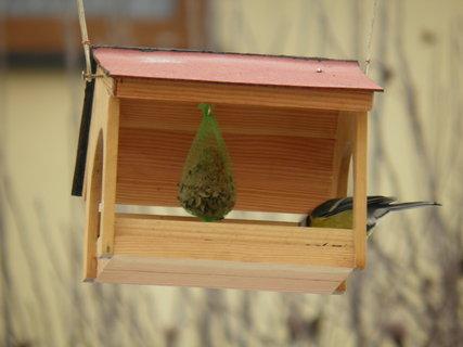 FOTKA - Ptáci v zimě 184