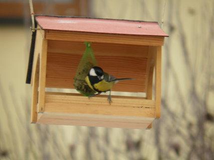 FOTKA - Pt�ci v zim� 185