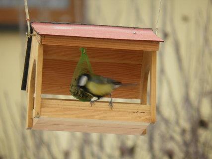 FOTKA - Ptáci v zimě 186