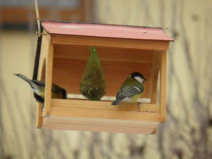 FOTKA - Ptáci v zimě 187