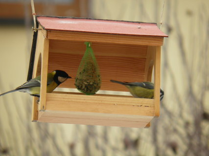 FOTKA - Ptáci v zimě 188