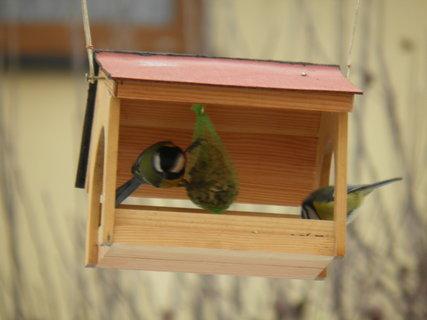FOTKA - Ptáci v zimě 189