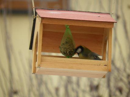 FOTKA - Ptáci v zimě 190