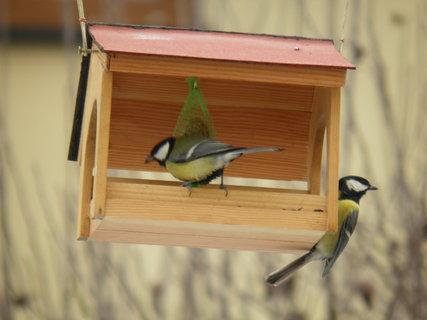 FOTKA - Ptáci v zimě 191