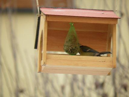 FOTKA - Ptáci v zimě 192