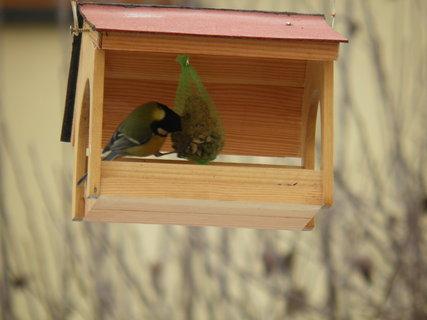 FOTKA - Ptáci v zimě 193