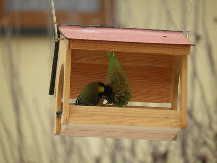 FOTKA - Ptáci v zimě 194